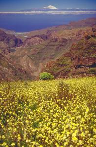 Ausflug auf den Kanaren, La Aldea auf Gran Canaria mit dem Teide auf Teneriffa im Hintergrund