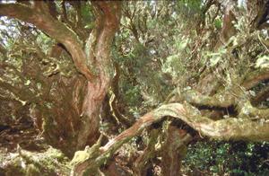 Urwald auf La Gomera