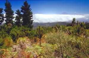 Gomera mit Blick Richtung Teide, Teneriffa