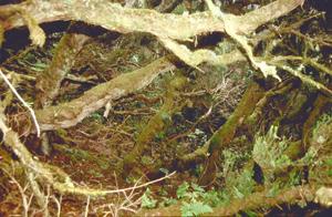 Urwald im Nationalpark von La Gomera