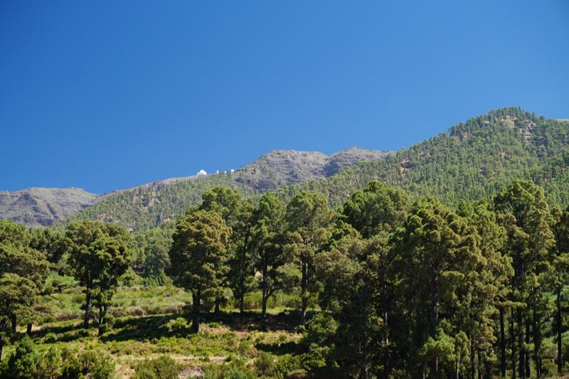 Alter Kiefernwald im Norden von La Palma