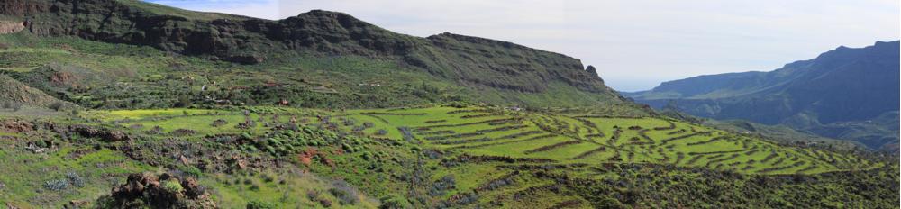 Grüne Terrassenfelder im Winter oberhalb von Santa Lucia, Gran Canaria.