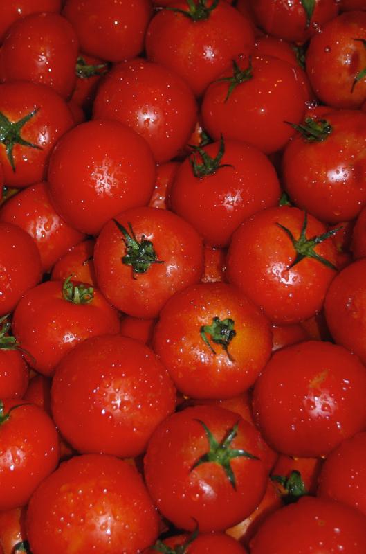 Tomaten aus Fuerteventura